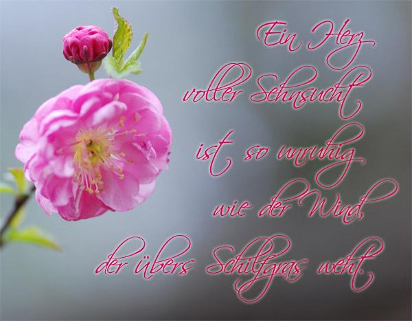 Image Result For Zitate Der Sehnsucht – Leben Zitate