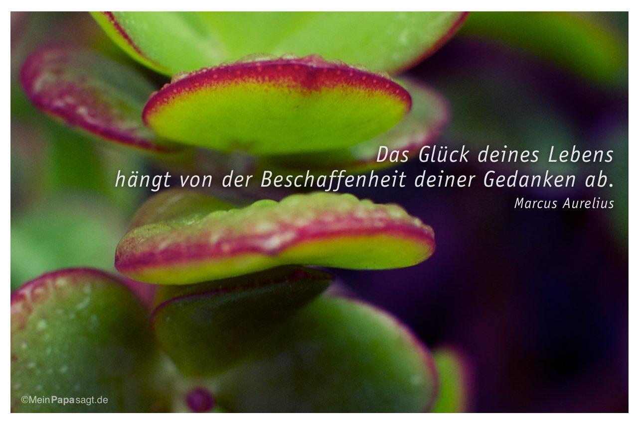 Geldbaum Mit Dem Marcus Aurelius Zitat Das Gluck Deines Lebens Hangt Von Der Beschaffenheit Deiner