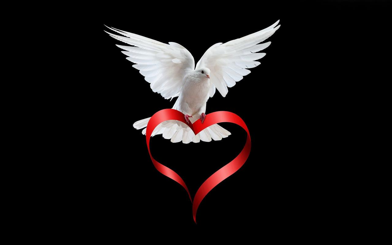 Love White Dove