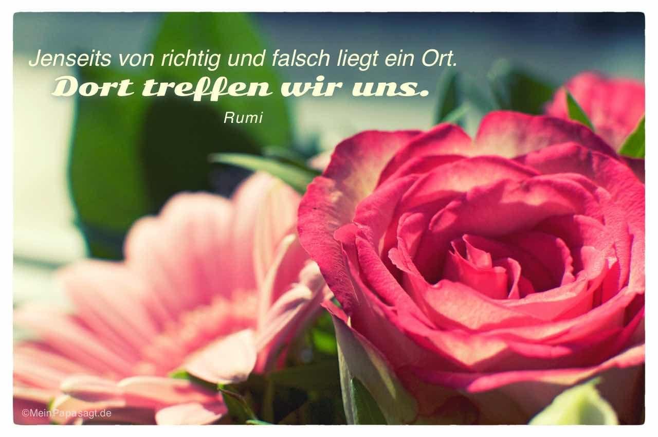 Rosen Gerbera Mit Dem Rumi Zitat Jenseits Von Richtig Und Falsch Liegt Ein Ort