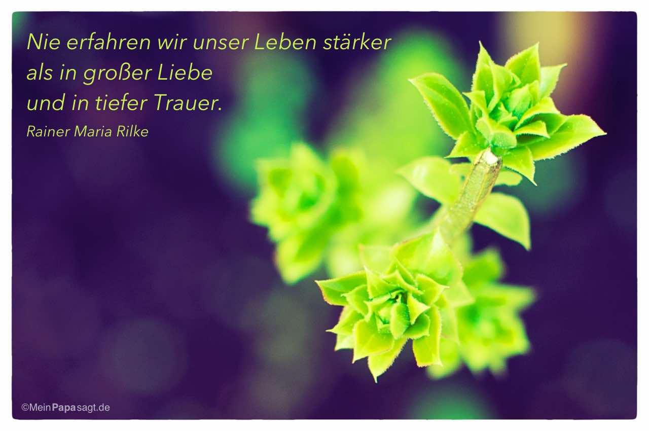 Knospe Mit Dem Rainer Maria Rilke Zitat Nie Erfahren Wir Unser Leben Starker Als In