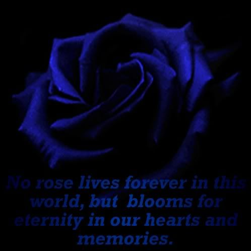 Black And Blue Roses Bing Images