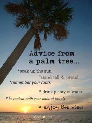 Stand Tall Lone Palm Love The Ocean Beach Ocean Quotes To Live By Beach Quotes Pinterest Beach Ocean Quotes Stand Tall And Ocean Beach