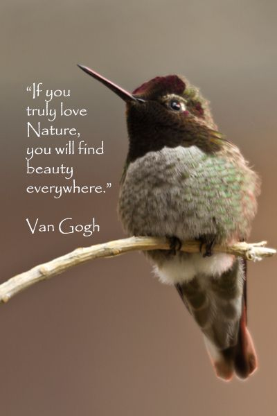 If You Truly Love Nature You Will Find Beauty Everywhere Van Gogh On Image Of Hummingbird Taken In Tucson Arizona By Florence Mcginn This Quote
