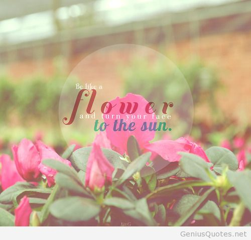May Flower Quote