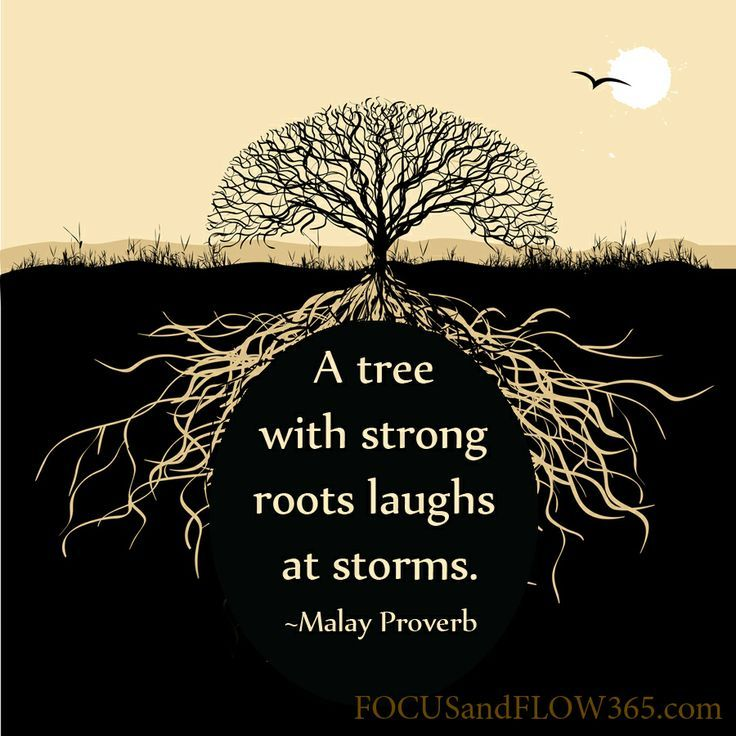 A Tree With Strong Roots Laughs At Storms Google Search