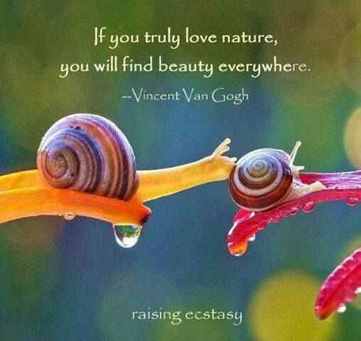 Vincent Van Gogh Quote If You Truly Love Nature You Will Find Beauty Everywhere