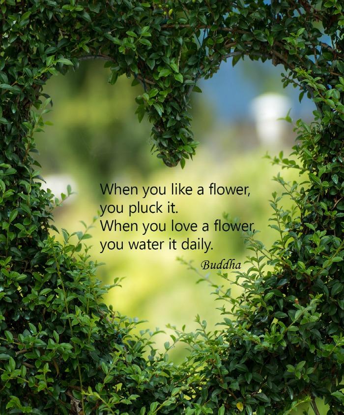 Buddha Inspirational Quote