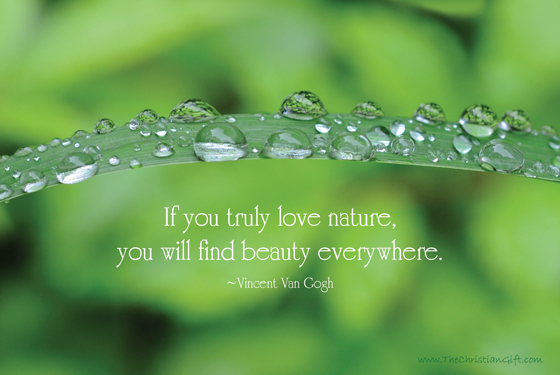 If You Truly Love Nature You Will Find Beauty Everywhere