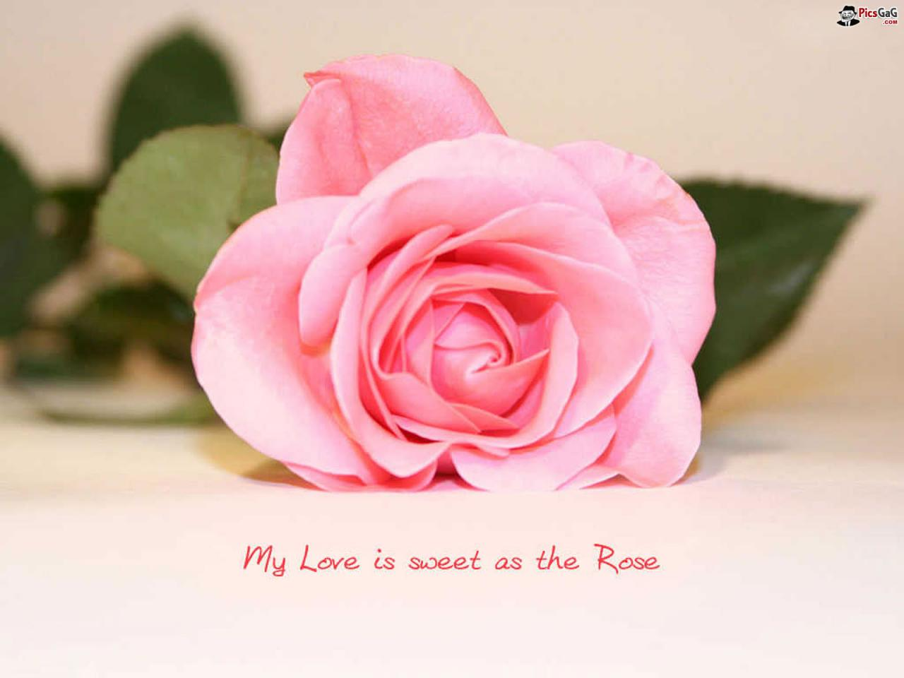 Sweet Flower And Love Quotes Wonderful Green Simple Cl Ic Petal Simple Shadow M Ive