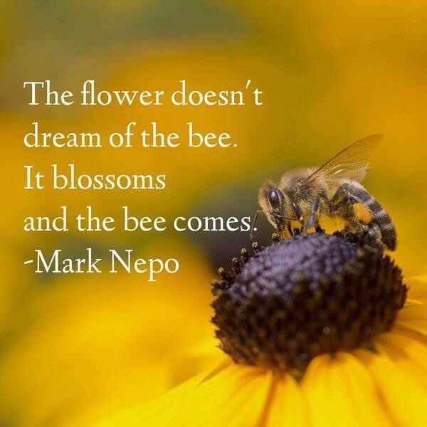 The Flower Doesnt Dream Of The Bee It Blossoms And The Bee Comes Image Quote By Mark Nepo