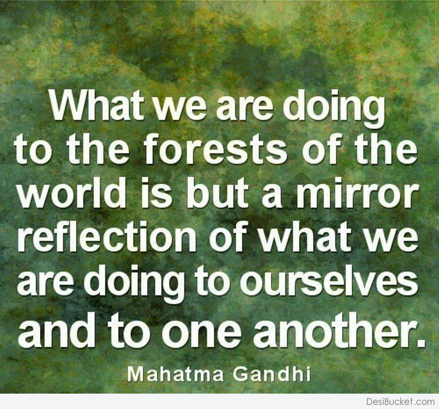 Quotes About Forests