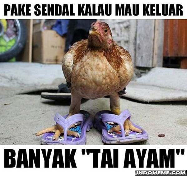 Memes Zitatenal Islam