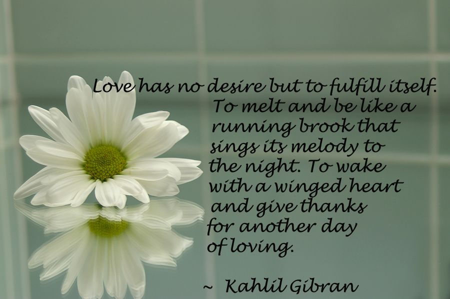 Zen Quote About Love Sign Up For Our Mailing List At Http Reflectionway