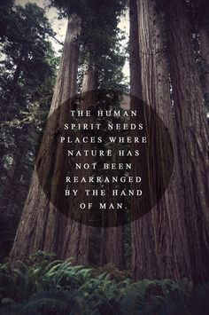 Art Forest Typography Quotes