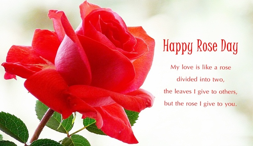 Valentines Day  Rose Day Quotes