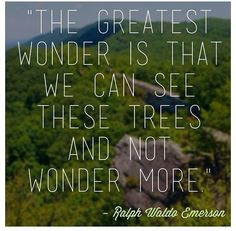 The Greatest Wonder Is That We Can See These Trees And Not Wonder More