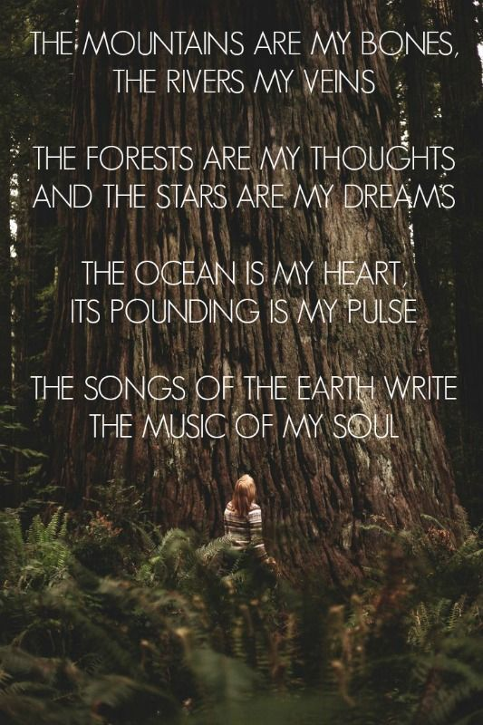 The Mountains Are My Bones The Rivers My Veins The Forests Are My Thoughts