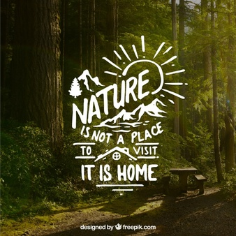 Lettering And Quote Design On Forest Background