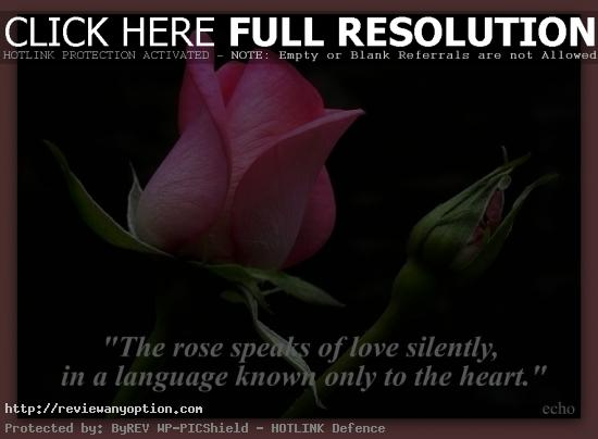 Love Flower Quotes Best Flowers Quotes