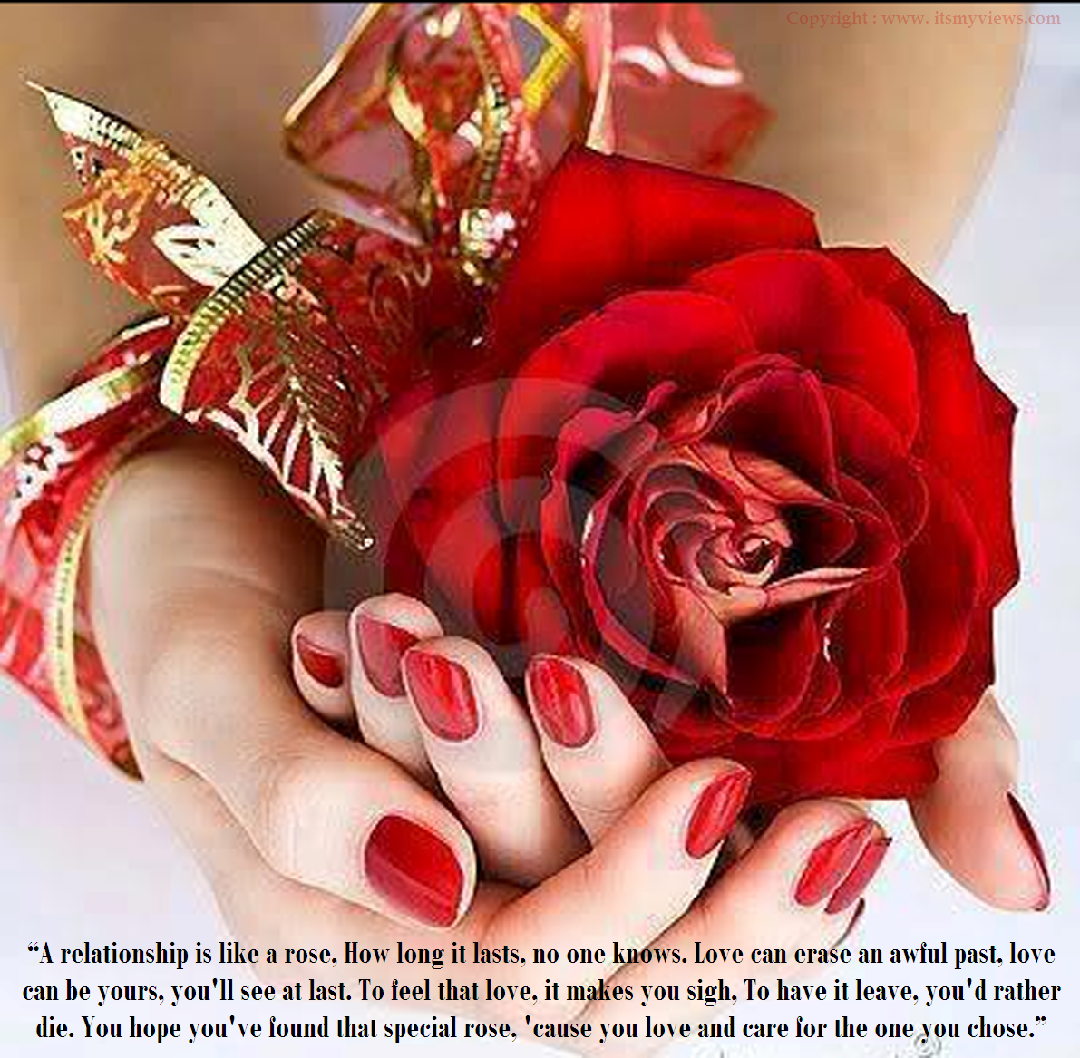 Latest Most Beautiful Red Rose Pictures With Romantic Love Quotes