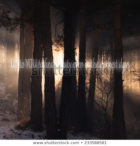 Unknown Inspirational Quote Background With Dark Woods In Background