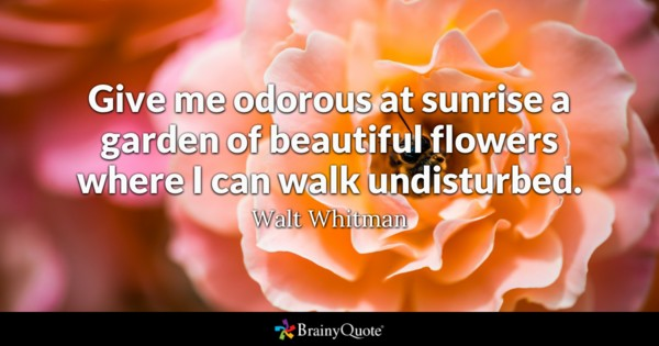 Give Me Odorous At Sunrise A Garden Of Beautiful Flowers Where I Can Walk Undisturbed