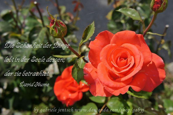 Ich Liebe Rosen Daher Verwende Ichse Immer Wieder Als Motiv Fur Meine Gruskarten Aus