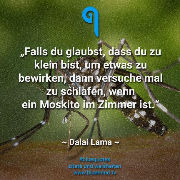 Dalai Lama Seine Besten Zitate