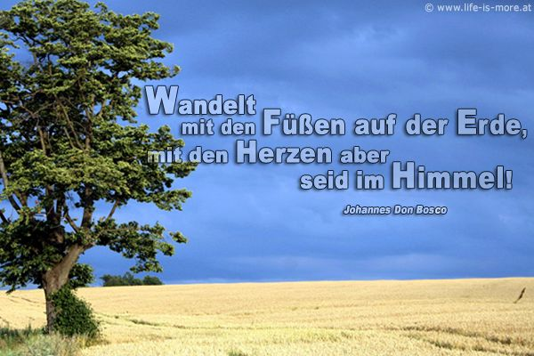 Image Result For Bibel Zitate Blumen