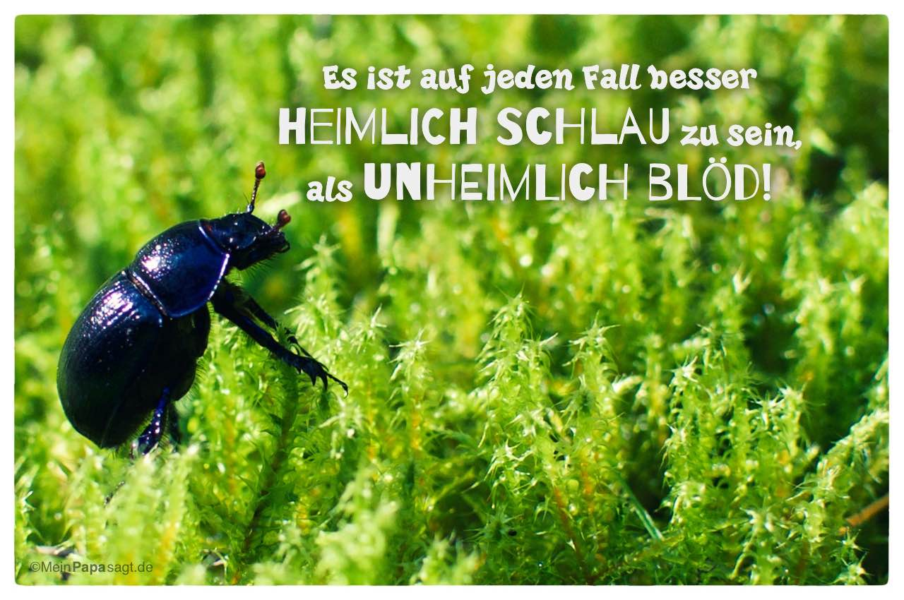 Image Result For Zitate Geburtstag Albert Einstein
