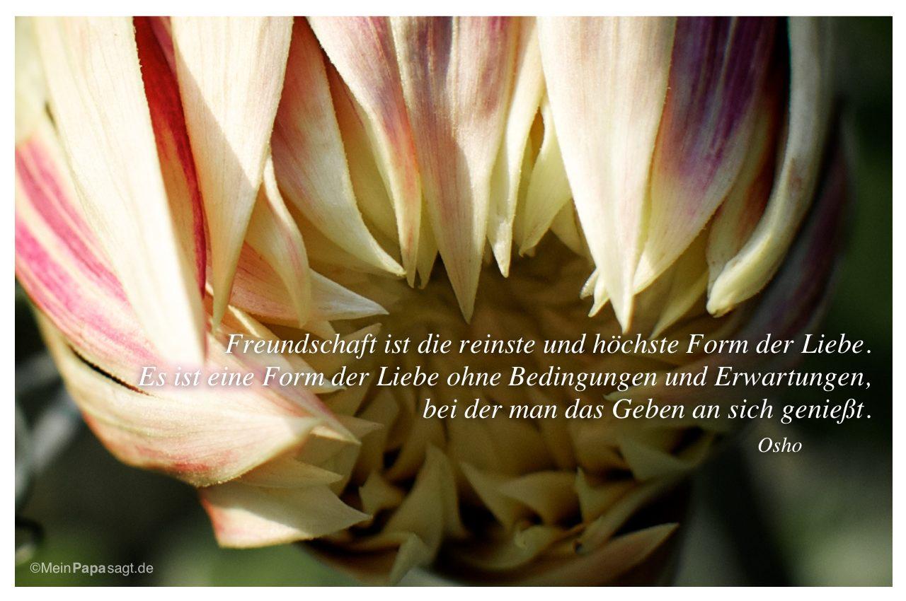 Freundschaft Ist Reinste Und Hchste Form Der Liebe Es Ist Dahlie Mit Dem Zitat Freundschaft
