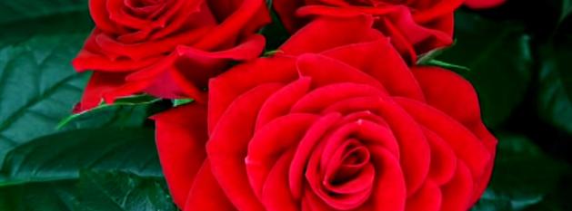 Romantisch  Schonsten Songzitate Zum Thema Liebe Songtexte Com