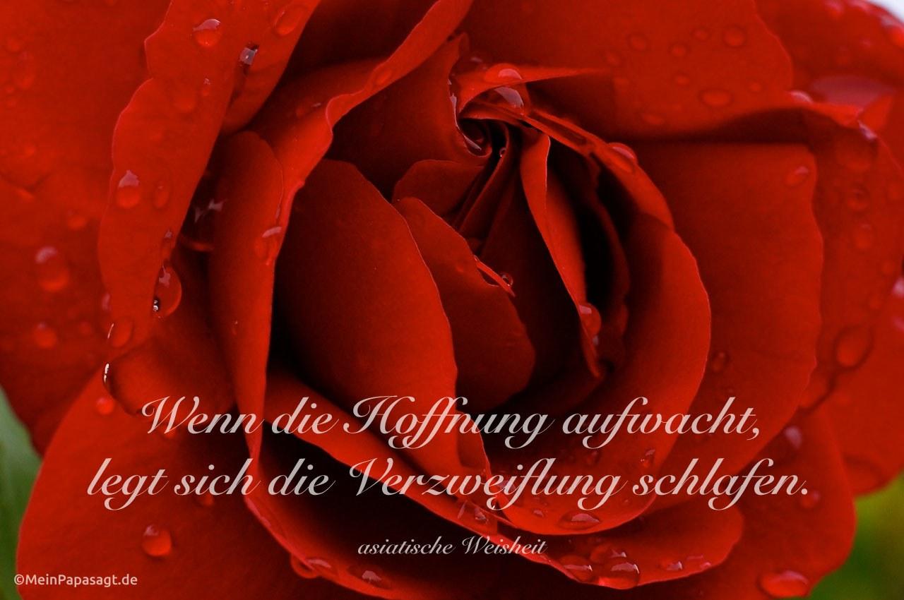 Rosen Sprüche Zum Geburtstag Beliebte