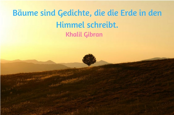 Image Result For Laotse Zitate In Englisch