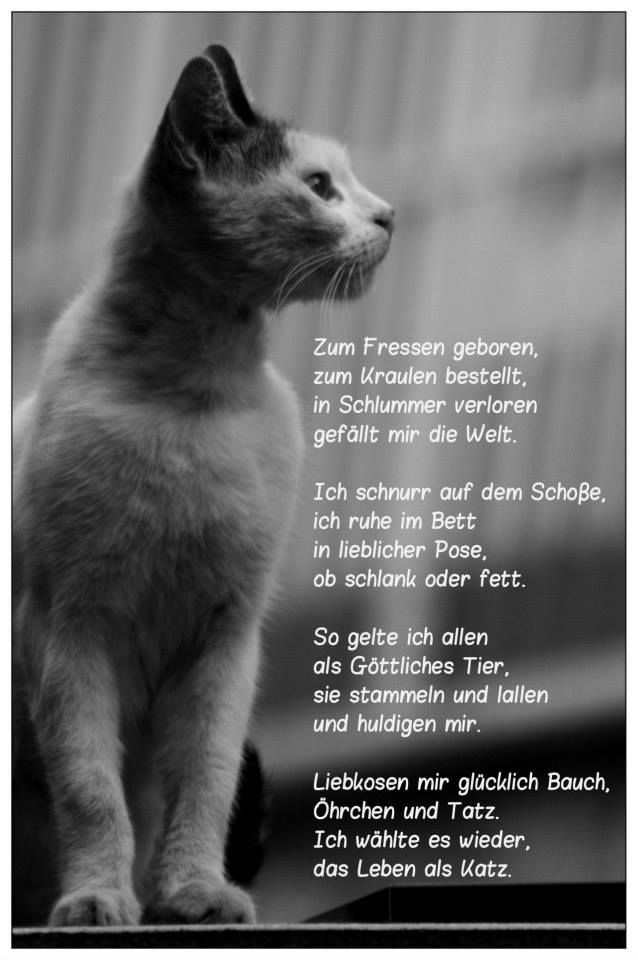 Spruche Tiere Geliebte Katze Wahrheiten Gedanken Lustige Tiere