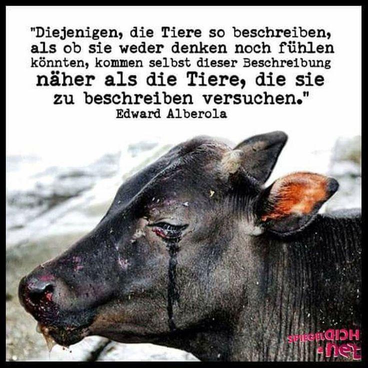 Tiere Retten Wahres Leben Traurige Spruche Zitate Zum Nachdenken Idioten Gute Menschen Welpen Spruche Zitate Tierliebe