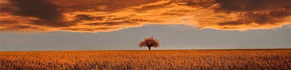 Einzelner Baum Auf Goldenen Horizont