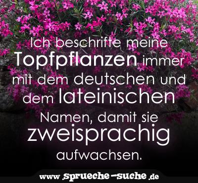 Ich Beschrifte Meine Topfpflanzen Immer Mit Dem Deutschen Und Dem Lateinischen Namen Damit Sie Zweisprachig Aufwachsen