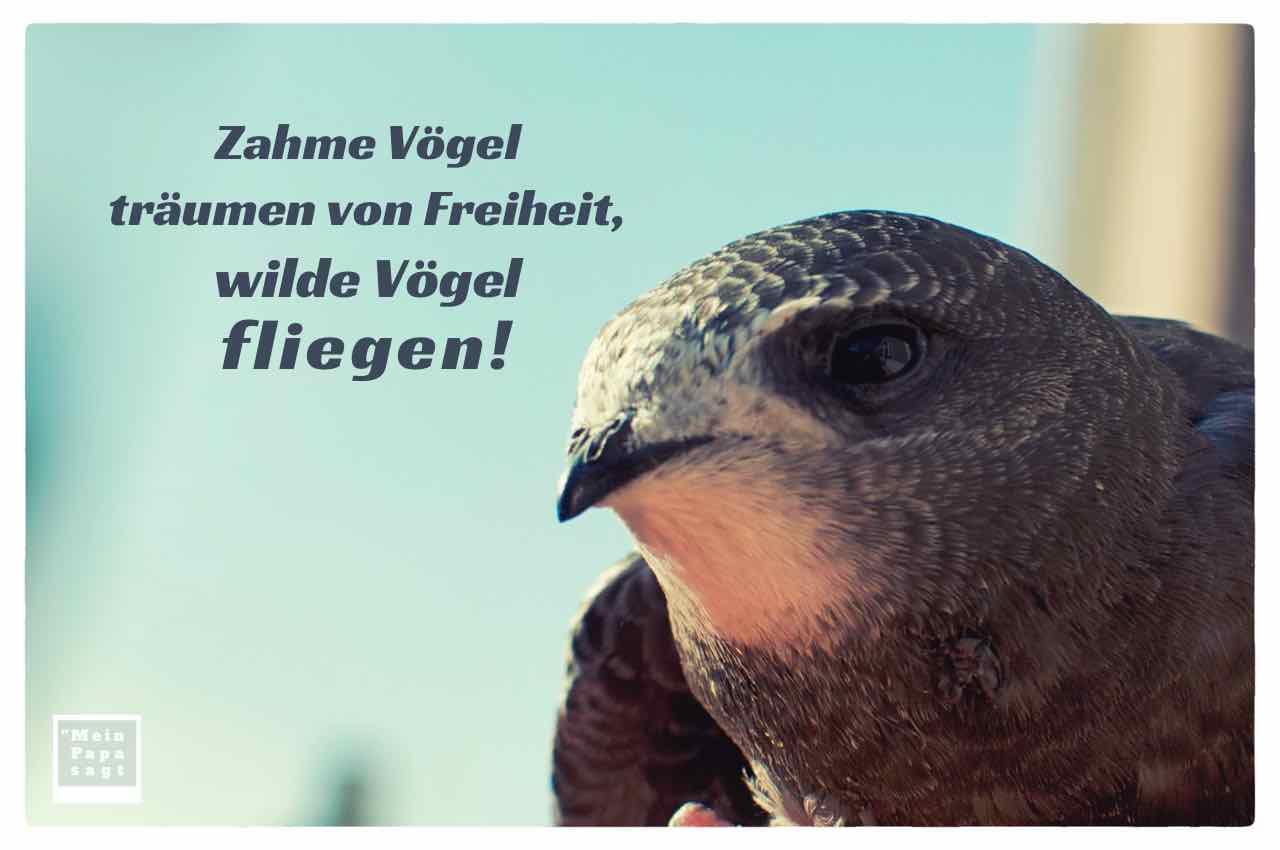 Mein Papa Sagt Zahme Vogel Traumen Von Freiheit Wilde Vogel Fliegen