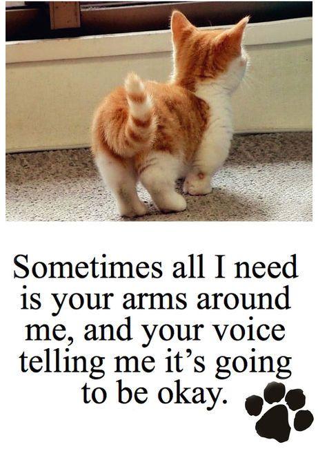 Cute Cat Quotes Quotesgram