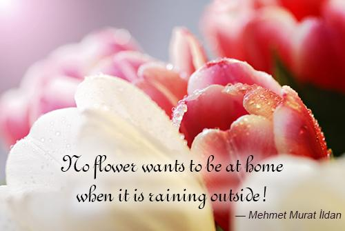 Mehmet Quote About Flowers