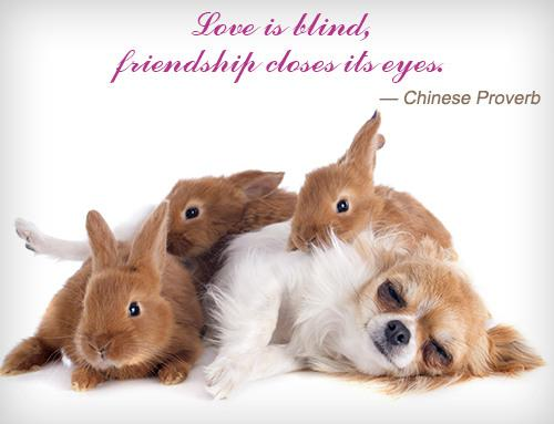 Chinese Proverb Friendship