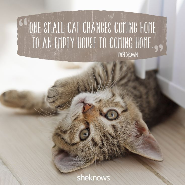 Cat Quotes That Perfectly Explain Your Love For Kitties I Cat Quotes