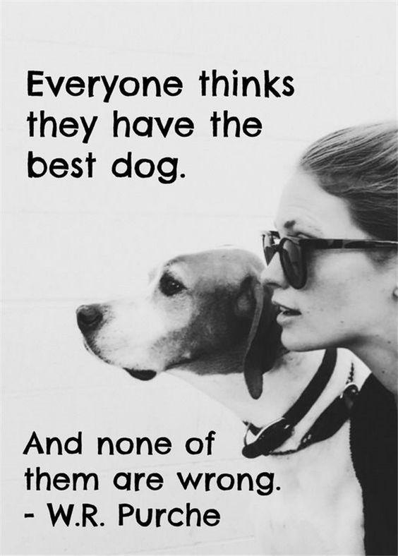 The Best Dog Meine Liebewahrheitenhundezitathund