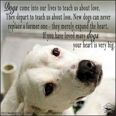I Love My Dog Quotes Sayings