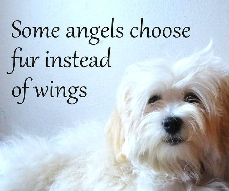 Quotes About Dogs And Sayings