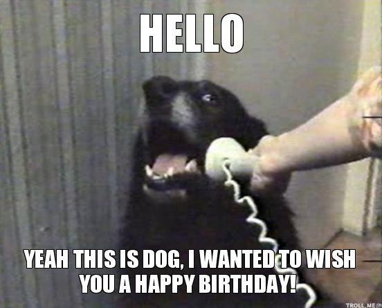 Funny Happy Birthday Animal Meme | Lucu Sekali Ayo Ketawa
