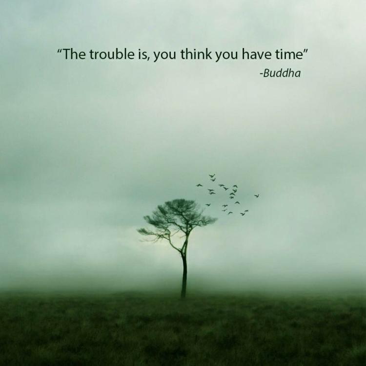 Buddha Zitate Lebensweisheiten Englisch Baum Vogel Nebel Buddha Zitate Weisheiten Spruche Fur Verschiedene Lebenssituationen