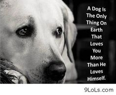 A Dog Is The Only Thing On Earth That Loves You More Than You Love Yourself Josh Billings Mans Best Friend Pinterest Dog Animal And Animal Pics
